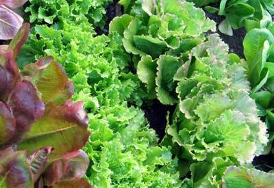 Plants in Garden - Miami FL