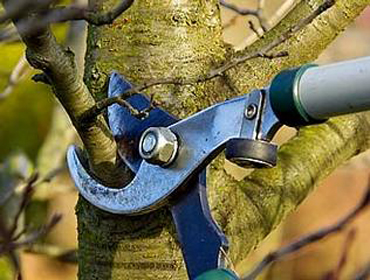 Tree Branch Being Cut